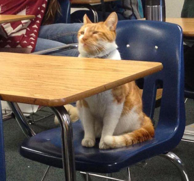 in class 和 in a class 有什麼不同?