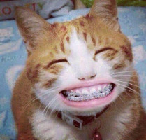 「牙套」的英文怎麼說?