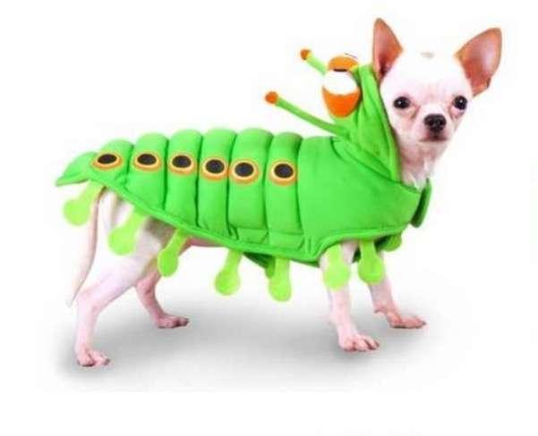 worm 和 bug 有什麼不同?