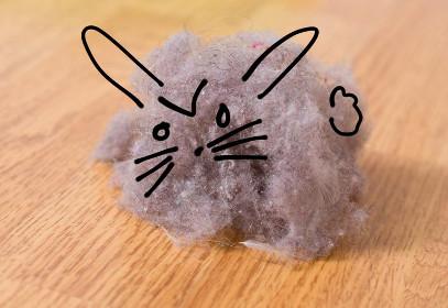 dust bunny是什麼意思?