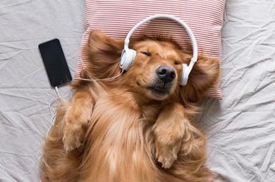 「降噪耳機」的英文怎麼說?