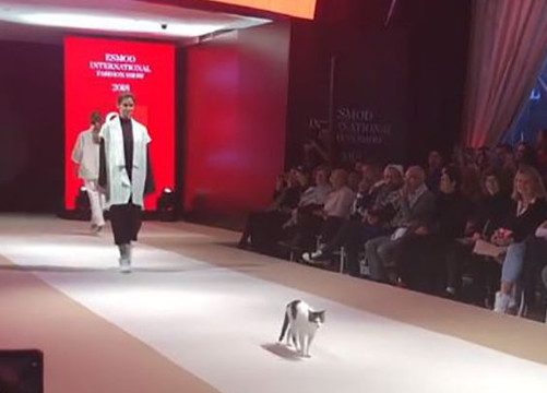 「catwalk」不是指走台步!