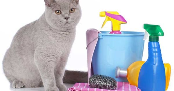 常見英文錯誤:「保持健康/清潔」不叫keep healthy/clean